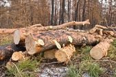Heap of logs in a forest — Stock Photo