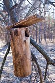 Birdhouse on a tree branch — Stock Photo
