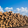 Stock Photo: Huge pile of pine tree barrels
