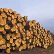 Stock Photo: Heap of pine barrel in forest