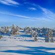 Winter snowbound plain — Stock Photo