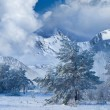 Winter forest in a mountain valley — Stock Photo