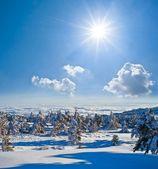 Zonnige winterdag — Stockfoto