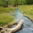 Stock Photo: Blue river in forest