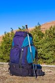 Touristic backpack on a forest glade — Stock Photo