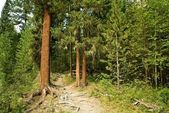 Tayga ormanı — Stok fotoğraf