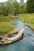 Blå floden i en skog — Stockfoto