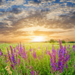 Sunset in a steppe — Stock Photo