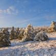 Stock Photo: Evening snowbound forest