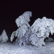 Pine trees in a snow at the night — Stok fotoğraf