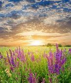 Zonsondergang in een steppe — Stockfoto
