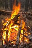 Touristic camp-fire in a forest — Stockfoto