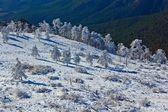 Foresta invernale su un bordo della montagna — Foto Stock