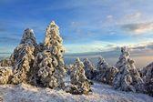 Zimní Les landsape — Stock fotografie