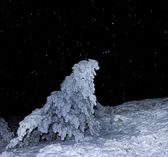 Snowbound forest at the night — Stockfoto