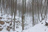 Zimní zamlžených lesních — Stock fotografie