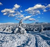 Snowbound road in a winter forest — Stock Photo