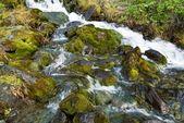 Rauschen von wasser in einem berge — Stockfoto