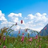 Flowers on a mountain pasture — Stock Photo