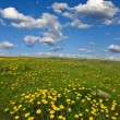 Spring field with dandelions — Stock Photo