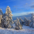 Stock Photo: Winter snowbound forest