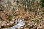 Small river in a mountain canyon — ストック写真