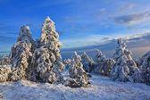 Winter snowbound forest — Stock Photo