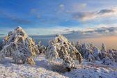 Verschneiten bergwald am abend — Stockfoto