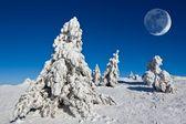Großer mond über einem pinienwald winter — Stockfoto