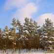 Winter scene — Stock Photo #8794292