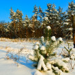 Forest glade in snow — Stock Photo #8794396