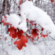 Stock Photo: Red foliage in winter forest