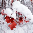 Red foliage in the winter forest — Stock Photo
