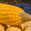 Head of corn — Stock Photo #8794762