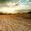 Evening steppe — Stock Photo #8794957