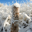 Boundary post is in the winter forest — Stockfoto