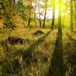 Morning in a forest — Stock Photo #8795473
