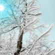 Stock Photo: Mystic winter