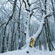 Quiet snowbound winter forest — Stock Photo