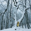 Stock Photo: Quiet snowbound winter forest