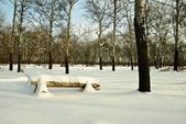 Bench in a winter forest — Stock Photo