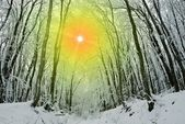 Sparkle sun in winter forest — Stock Photo