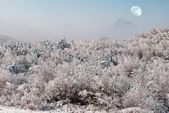 Winter forest under a moon — Stock Photo