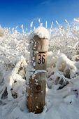 Grenze post ist in den winterwald — Stockfoto