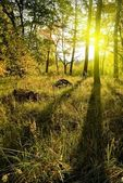 Morning in a forest — Stock Photo