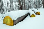 Logs are concealed snow — Stock Photo