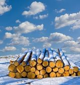 Heap of logs in a snow — Stock Photo