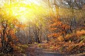 Evening autumn forest — Stock Photo