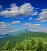 Pine-tree mountain forest — Foto Stock