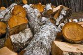 Heap of birch logs — Stock Photo
